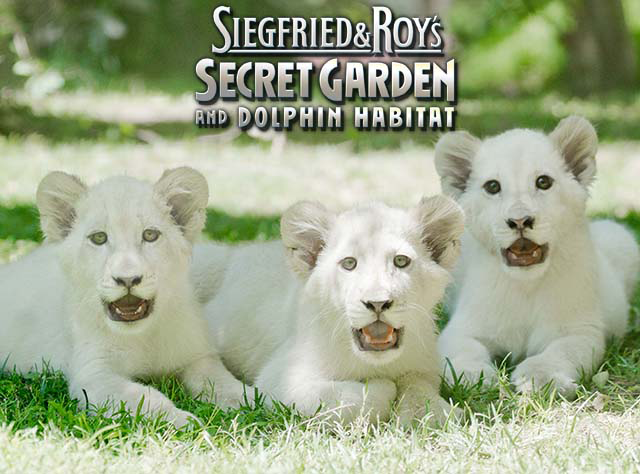 siegfried roys secret garden dolphin habitat - Siegfried And Roy Secret Garden
